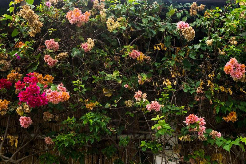 sanjuanflowers.jpg