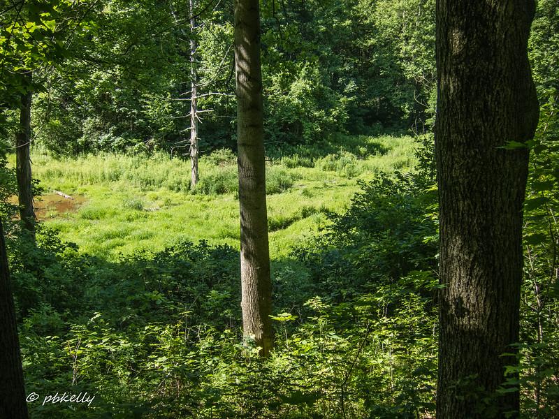 morgan swamp 062517-1.jpg