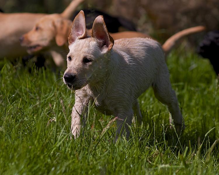 Puppies 800.jpg