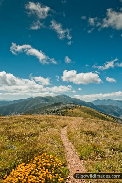 The Razorback, Mt Feathertop