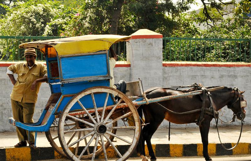 _DSC5425_horse_cart.jpg