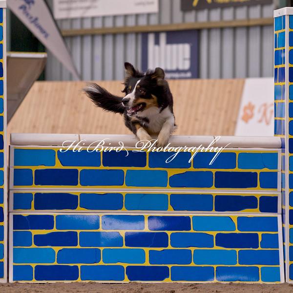 medium dog agility 1179.jpg