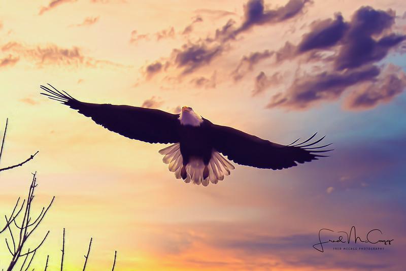 Eagle Sunset 2.jpg