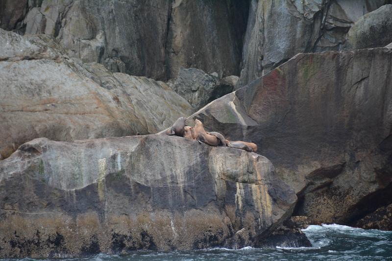 Kenai-Fjords-46.jpg