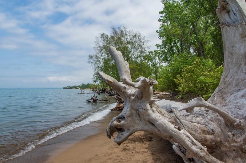 Driftwood-Erie.jpg