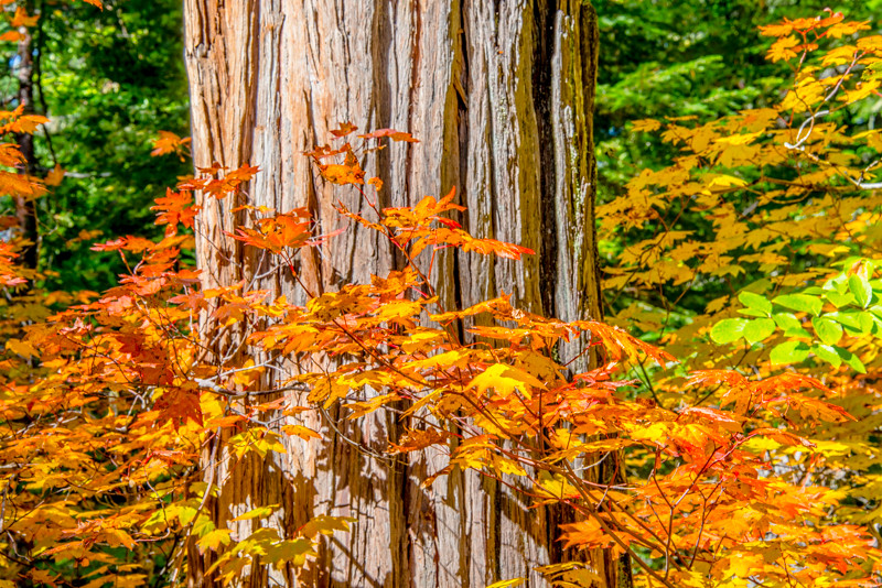 Rogue River_Fall Colors-4.jpg