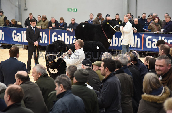 Stirling Bull Sales February 2018