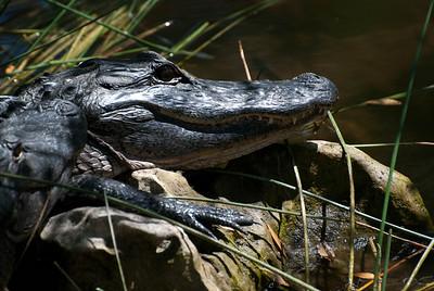Everglades Florida 3-18-11