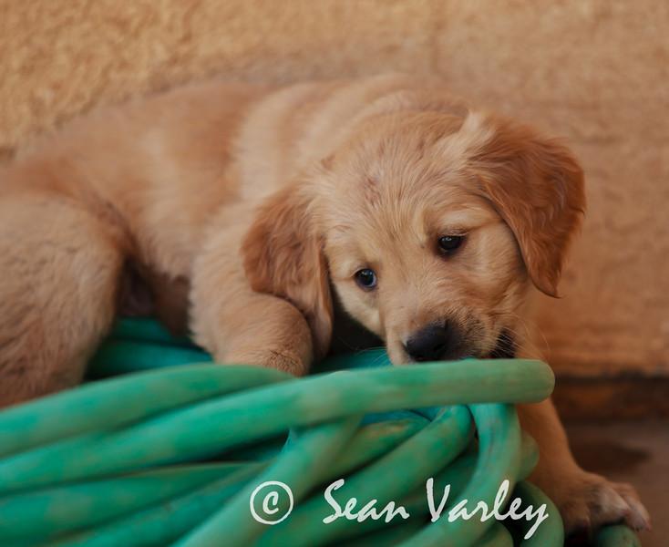 2011.04.16 Daisy 0099.jpg