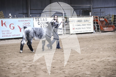 Cattle Ring Shots