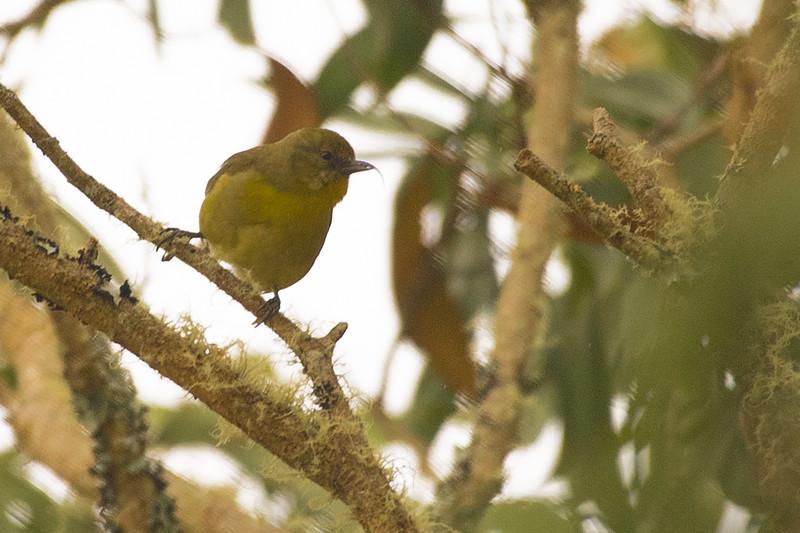 19-Sept Hawaii Birds-5690.JPG