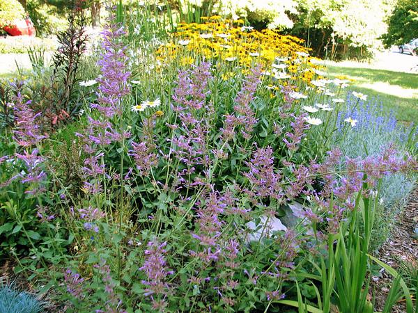 Garden update August 2007