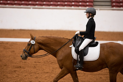 Horse 108