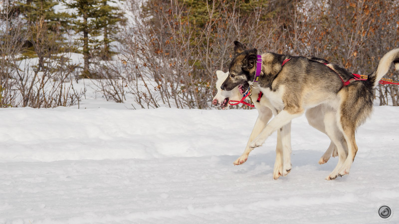 20190325_Blaire_and_Liz_Mushing_33.jpg