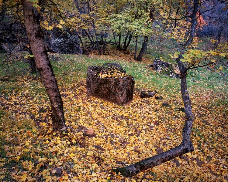 Trees Open to Rock.jpg