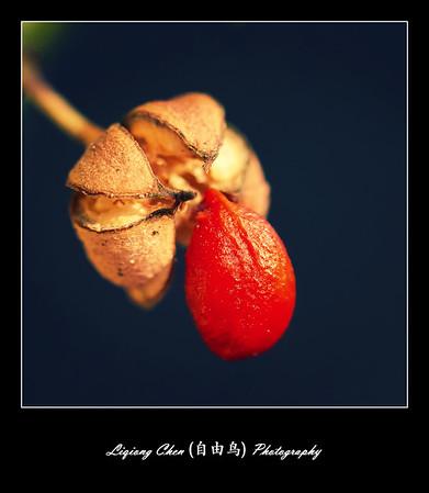 Unknown flower-11
