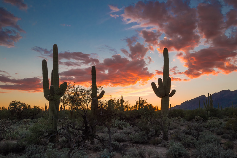Sabino Sunset 8-8-2017a.jpg