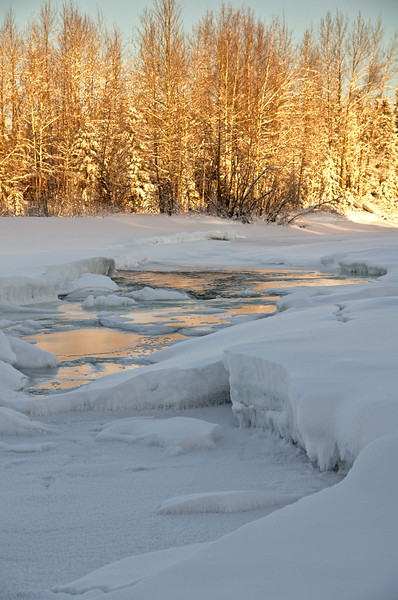 Golden water on the frozen Chena