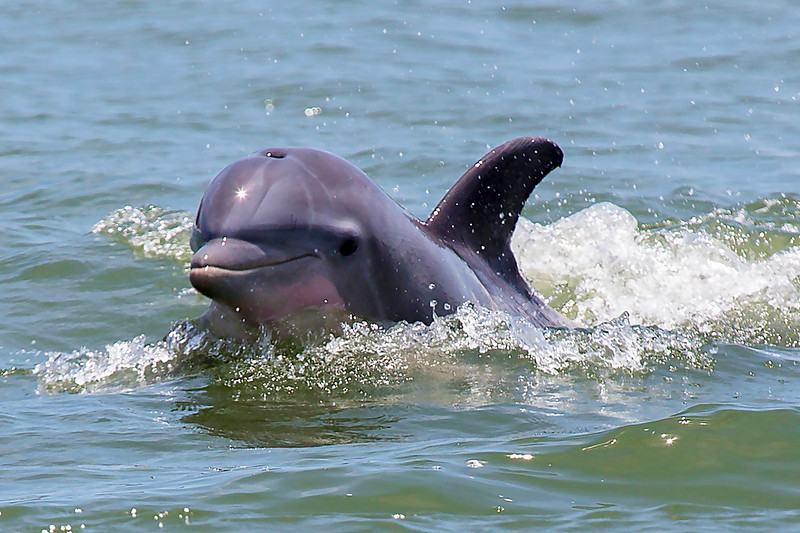 Galveston Bay Dolphin greets us.
