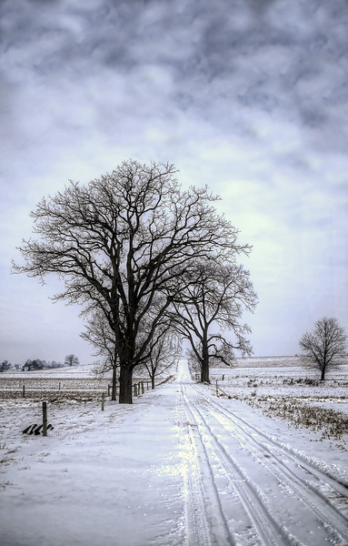 252 snow - amish lane and trees offroad(p, site).jpg