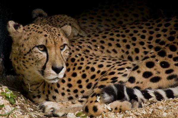 National Zoo 10.5.08
