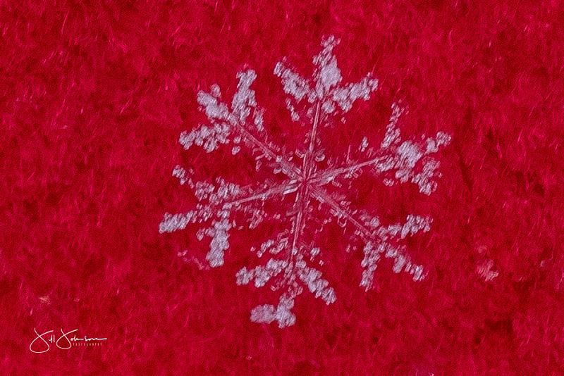 snowflakes-2735.jpg