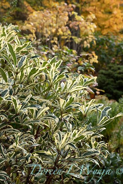 Dietrick fall garden_2101.jpg