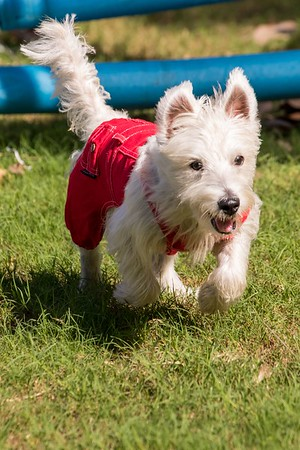 Paws4You Howl-O-Ween at Pinecrest Gardens 2019