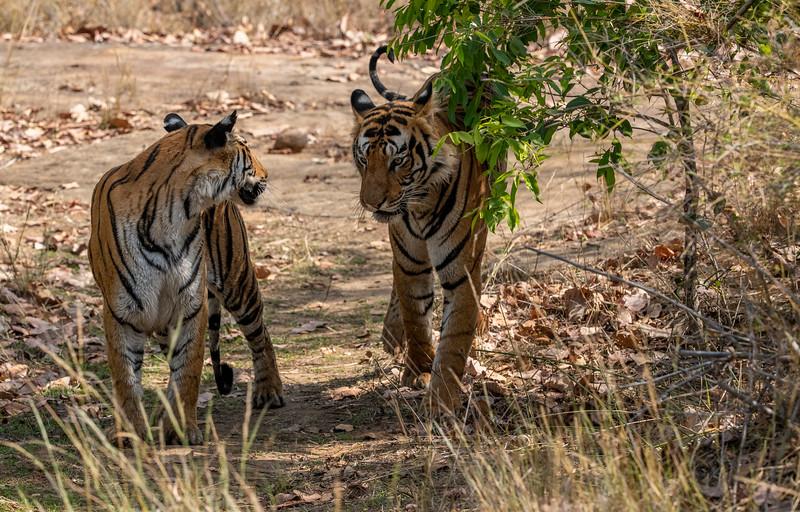 India_April_2019-731.jpg