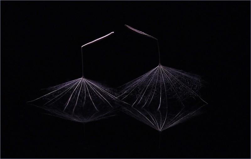 105.Russ Butler.1.Dancing in the Dark.jpg