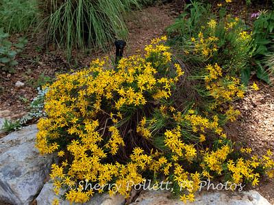 Zilker Botanical Gardens, Apr '11