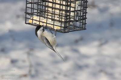 Winter Birds 2013