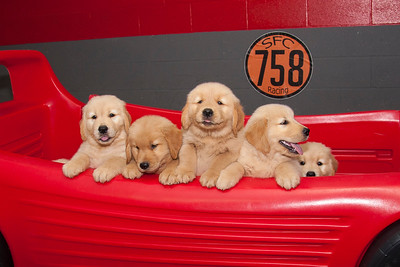 The Goldens
