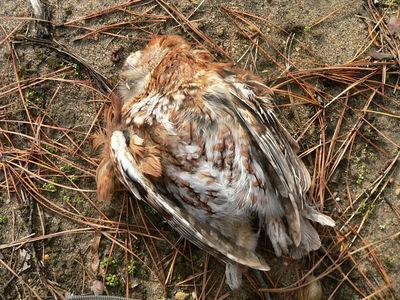 Owl D.O.R. 12-31-05