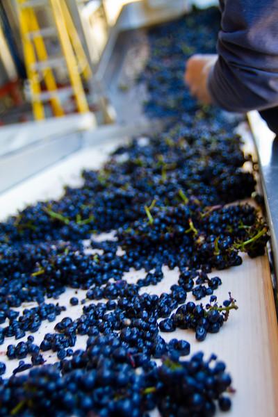 Vineyard/Harvest Work