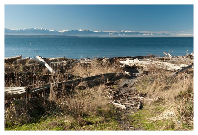 driftwood mountains.jpg
