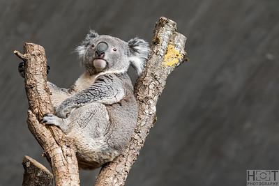 2019-03-09 Australia im Zoo