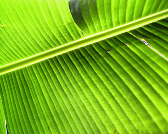 Banana leaf art