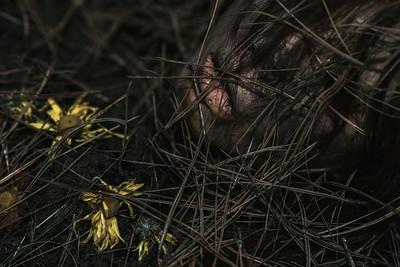 Ajusco Muertas con Flores