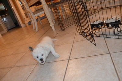 2012 Nephew Oliver joins the family