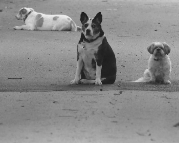 Jennings dogs bw.jpg