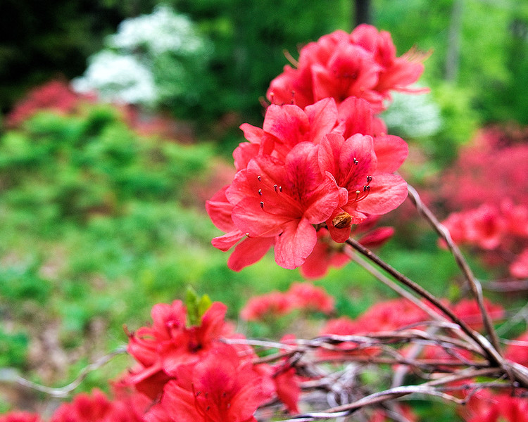 flowermeadow.jpg