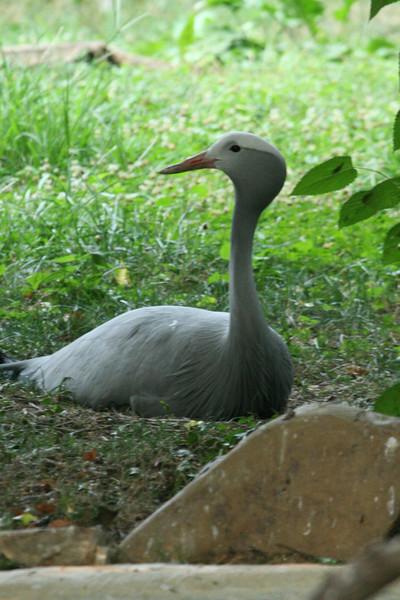 Birds080407_0011.JPG