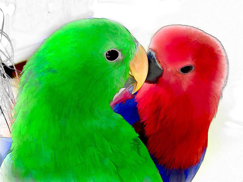 jan 20 - birds.jpg
