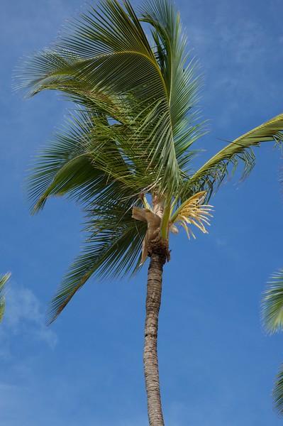 Single Palm tree against blue shy.jpg