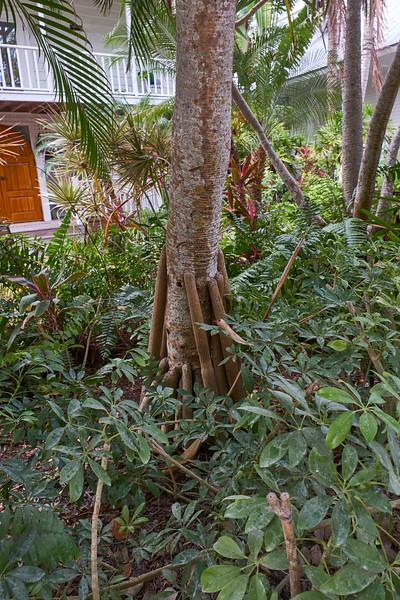 Useppa-Botanical-Walk-284.jpg