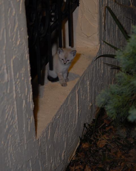 2007 04 12 - New Kitty 038.JPG