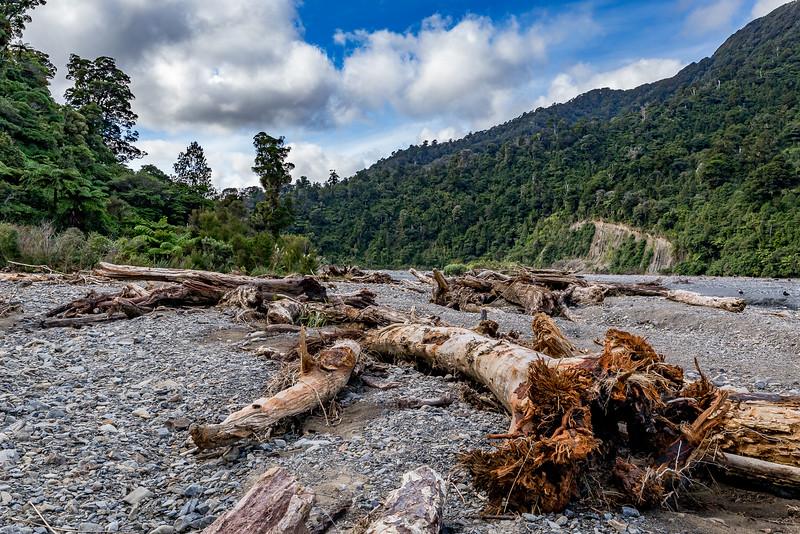 Bachbett des «Orongorongo River» im «Rimutaka Forest Park»
