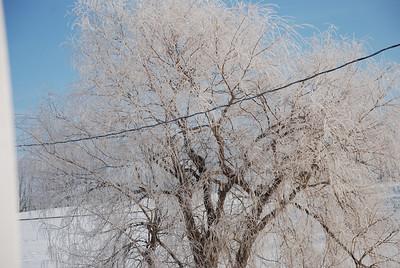 Snow Feb 2009