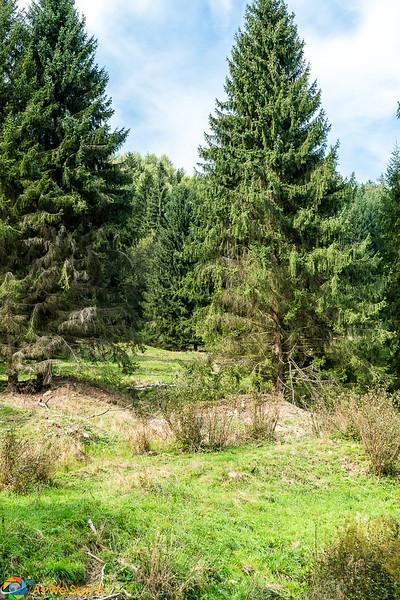 Park-Boheminium-06512.jpg